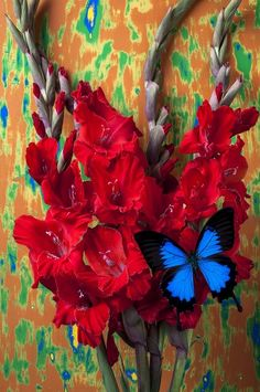 Red Gladiolus and Blue Butterfly