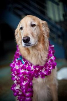 Golden dog orchid flower crown beach wedding ❀Flowers in their coats❀