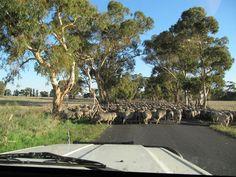 Shifting the sheep
