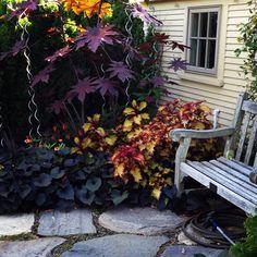 Tower Hill, patio stone & castor bean plant combo Castor Bean Plant, Patio Stone, Poisonous Plants, Mole, Outdoor Furniture, Outdoor Decor, Outdoor Spaces, Gardening, Home Decor