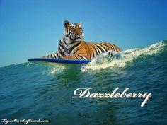 surfer tiger