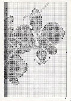 Gallery.ru / Фото #38 - Орхидеи - mornela