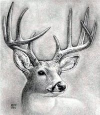 How to draw a deer head, buck, dear head