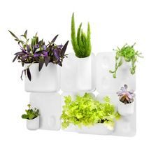 Wall-Mounted Modular Storage.  So fun for growing plants and herbs indoors!