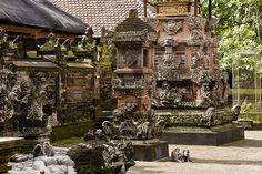 Monkey sanctuary, Ubud, Bali, Indonesia
