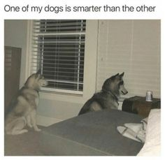 Funny Memes Pictures of Today - Page 9 of 32 - Cineloger Funny Animal Memes, Dog Memes, Cute Funny Animals, Funny Animal Pictures, Funny Cute, Funny Dogs, Funny Memes, Animal Humor, Baby Memes