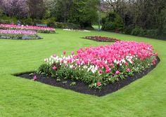 Merrion Square - Dublin   #Flowers