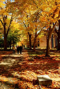 Princeton University in Autumn Usa University, Cornell University, Princeton University, Boarding School Aesthetic, College Aesthetic, Us School, Dream School, Dream Life Game, College Campus