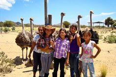 RANCHO MACANAO  Granja de Avestruces-Ostrich Farm  Isla de Margarita
