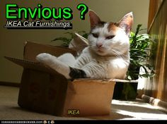 envious? cat in box