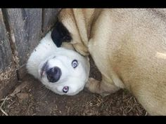 YOU WON'T BE ABLE TO STOP LAUGHING because of these DOGS! Funny and cute DOG compilation - YouTube