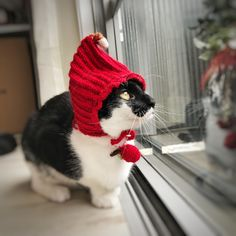 Crocheting cat cap with pine cone on top and red fruit pendant for Christmas