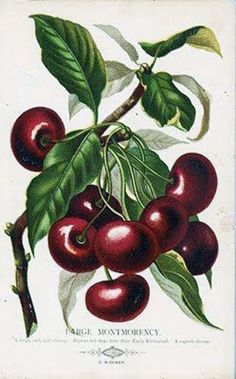 Cherries  **Art for the Kitchen...fits the color scheme perfectly***