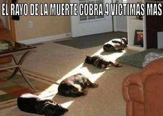 Como Educar a Mi Cachorro #pets #mascotas #cats #dogs #perro #gato