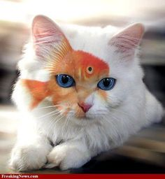 I know this is a kitty cat, but i had to pin this one.. So cool!