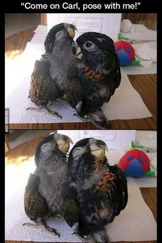 かわいい鳥だぞ~