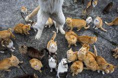 Kissat valtasivat japanilaiskylän, ihmisiä jäljellä enää 15 - katso kuvat - Ulkomaan uutiset - Ilta-Sanomat