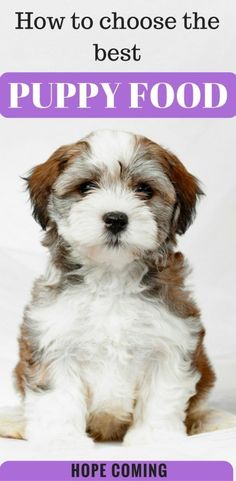 Puppy Food is going to be deciding factor in your puppy's health. You should never ignore it, a good puppy food contains a lot of proteins. Dog Training Come, Training Your Puppy, Training Tips, Dog Nutrition, Animal Nutrition, Best Puppy Food, Best Dog Food Brands, Best Puppies, Best Dog Breeds