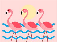 Flamingo designed by Dasha . Connect with them on Dribbble; Animation Film, Disney Animation, Free Animated Gifs, Flamingo Pictures, Gif Background, 3d Video, Flamingo Art, Cute Emoji, Beautiful Gif