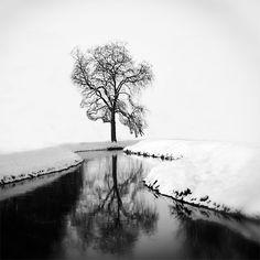 Tree II, photographie de Gittan Beheydt from Art Limited