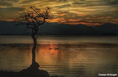 Sunset at Loch Lomond, two swans on the loch The Loch, Loch Lomond, Swans, Highlands, Rebel, Scotland, Medieval, Restoration, Sunset