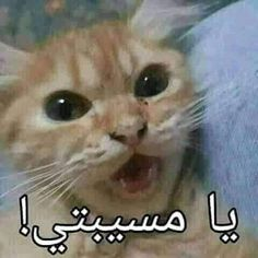 Funny Cartoon Quotes, Funny Study Quotes, Memes Funny Faces, Funny Qoutes, Funny Comics, Funny Profile Pictures, Funny Reaction Pictures, Funny Photos, Arabic Funny