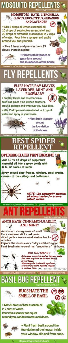 5 Best Homemade Mosquito and Insect Repellent insects camping diy diy ideas easy diy bugs tips life hacks all natural camping hacks good to know repellent repellents: #ad