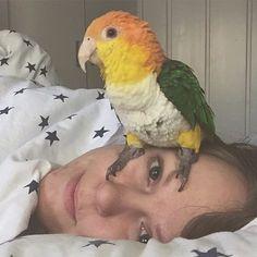 #caique #caiquegama #parrot #parrots #parrotsofinstagram by caique_kai http://www.australiaunwrapped.com/
