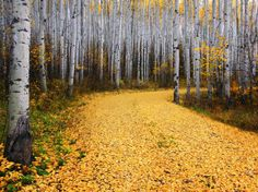 Colorado Trees | Forest Picture – Tree Wallpaper -- National Geographic Photo of the ...