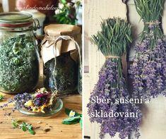 Sběr, sušení a skladování bylin
