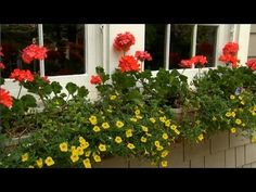 Window Box Container Gardening | P. Allen Smith and a friend and local nursery owner in New Jersey tells us how to make an eye catching window box arrangement. {video}