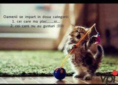 Internet, Cats, Gatos, Cat, Kitty, Kitty Cats