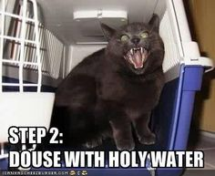 LOLcats: Image Gallery (Sorted by Oldest)   Know Your Meme