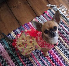 Customer photos of dogs wearing dog clothes patterns designed by Miss Daisy Designs