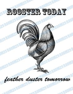 Image result for today's rooster is tomorrow's feather duster