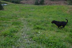 Gårdstunet Hundepensjonat: Nydelig helg på tunet