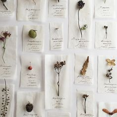 The Lane - errer Witch Aesthetic, Flower Aesthetic, Pressed Flower Art, Nature Journal, Nature Crafts, Flower Crafts, Dried Flowers, Artsy, Wall Decor