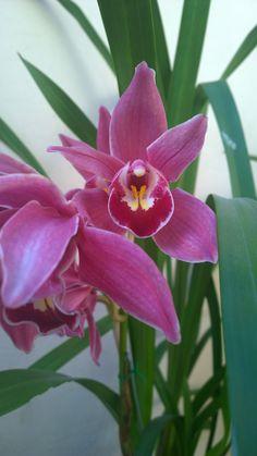 Orquídeas del Jardín de Casa