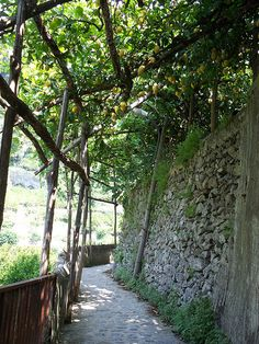 On the hike from Atrani to Ravello, Italy