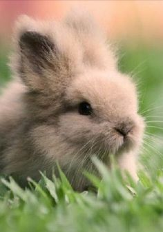Baby Teddy Bear Rabbit / Baby Bunny  - / - - Bookmark Your Local 14 day Weather FREE > www.weathertrends360.com/dashboard No Ads or Apps or Hidden Costs