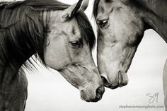 Black and white horse photography.