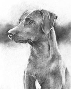 Blue Lacy drawing Charcoal on paper Drawing Portraits, Drawings, Blue Lacy, Texas Things, Drawing Ideas, Kai, Labrador Retriever, Art Ideas, Charcoal
