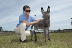 An amazing story about Emma, a miniature donkey, who was fitted with prosthetic limb at Auburn's College of Veterinary Medicine, War Eagle! http://ocm.auburn.edu/featured_story/saving_emma.html