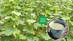 Organic Farming, Summer House Garden, Garden Design, Garden, Vertical Garden, Small Farm, Farm, Plants, Vegetable Garden Design