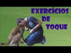 Exercícios de toque - Adestramento Positivo - Positive Dog Training