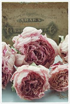 ❥ old pink roses