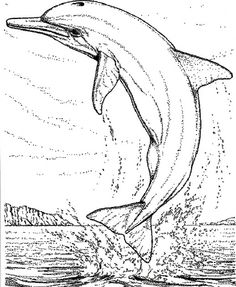 Realistic Dolphin Coloring Pages for Adults Enjoy Coloring Adult