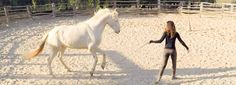 Freiheitsdressur mit Kenzie Dysli: Trainingsanleitung für die ersten Schritte mit deinem Pferd