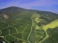 A tokaji Kopasz-hegy, előtérben a szőlő ültetvények - Tokaj-Bodrogzug Tájvédelmi Közet