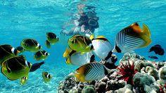 Snorkel in Hawaii